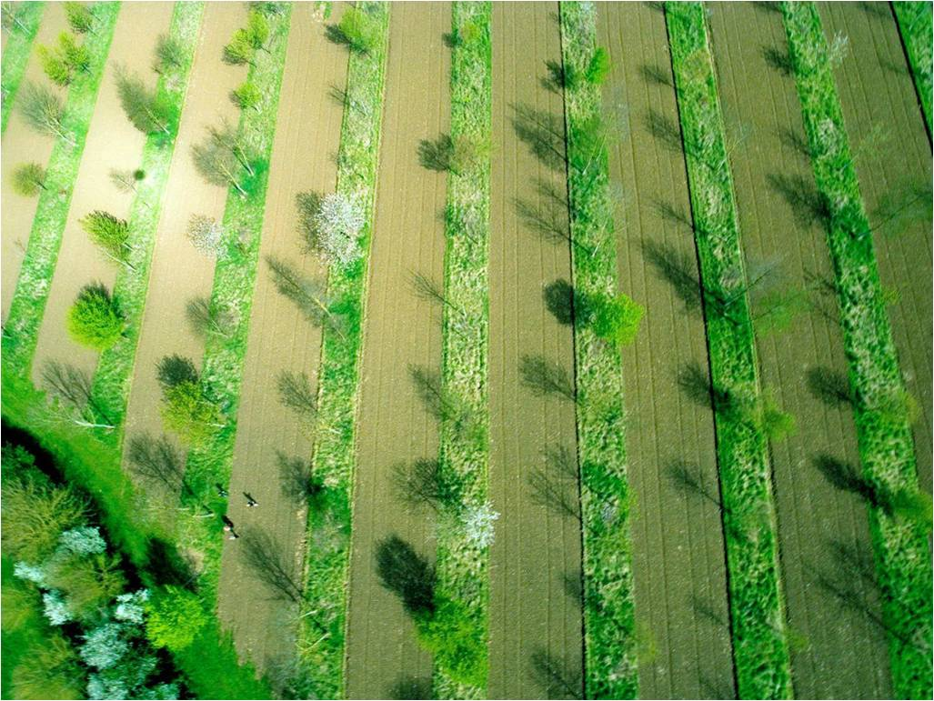 Agroforestry, combining trees and arable crops